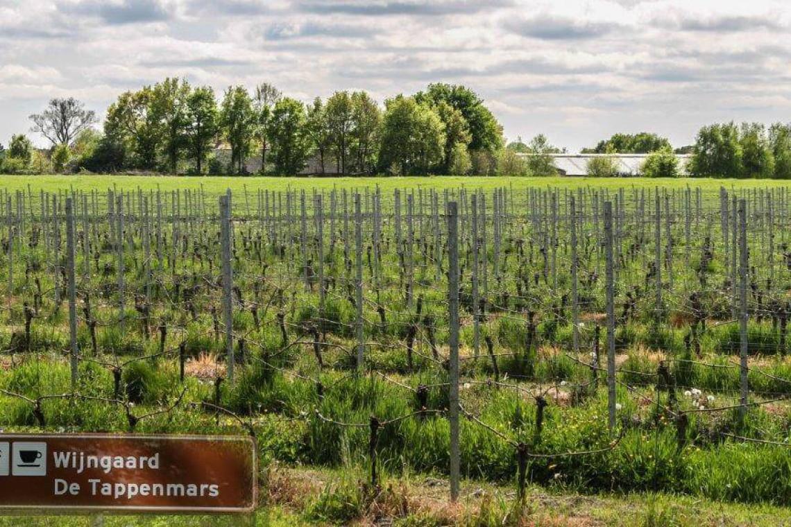 020-wijngaard-2